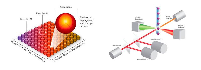 Lumunex proceso análicis